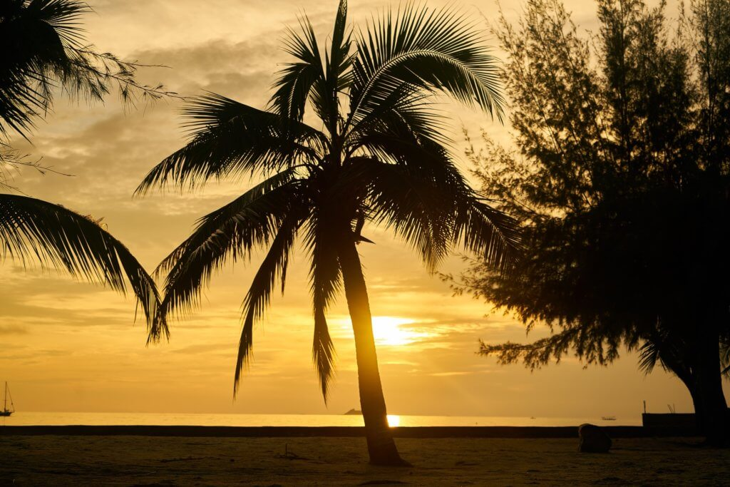que faire palm spring